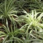 Love your Kitchen Series-Botanicals