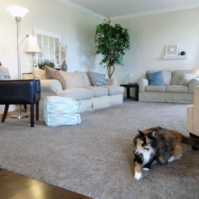5 Ways to Save Big on Hardwood Floors & New Floor Reveal