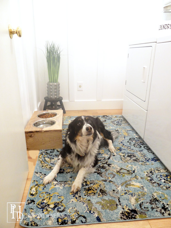 Laundry Room Dog Approved